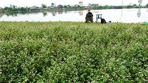 Sửng sốt: Người đàn ông trồng vườn hoa TAM GIÁC MẠCH giữa Hà Nội