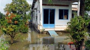 Xót xa 50.000 gốc mai Tết bị nhấn chìm do vỡ đê bao sông Sài Gòn