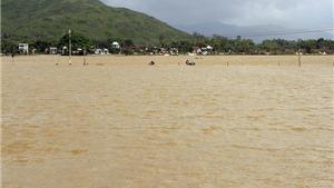 'Rốn lũ' Quảng Ngãi: Hàng trăm ngôi nhà đang bị ngập sâu, 8 người chết