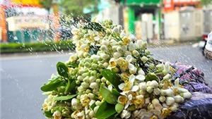 Gánh hoa bưởi đầu mùa tỏa hương thơm man mát những ngày sang Xuân