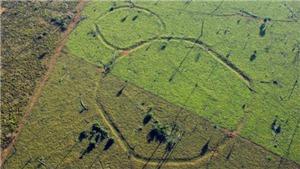 Giải mã những hình thù bí ẩn tại vùng rừng Amazon hàng nghìn năm trước