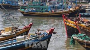 Cập nhật cơn bão số 14: Bình Thuận họp khẩn cấm tàu ra biển