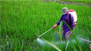 Sử dụng hợp lý thuốc bảo vệ thực vật vì an toàn vệ sinh thực phẩm