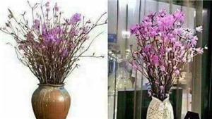Chơi Tết Nguyên đán với hoa đỗ quyên ngủ đông, đồng 2 USD in chó mạ vàng