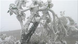 Hình ảnh đỉnh Mẫu Sơn lạnh âm độ, băng giá phủ trắng toát