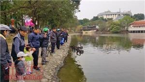 Cá chép đưa ông Công, ông Táo chầu Trời ở 'hồ Thiên Nga' Hà Nội