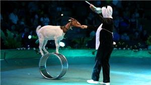 Xung quanh khuyến nghị của AFA về xiếc thú (kỳ 4): 'Việt Nam cần có đạo luật phúc lợi động vật'