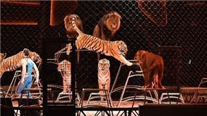 Xung quanh khuyến nghị của AFA về xiếc thú (kỳ 5 & hết): Tiếp nhận, nhưng phải phù hợp với truyền thống