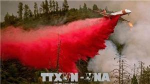'Bão lửa' ở rừng California, hàng chục nghìn người trốn chạy