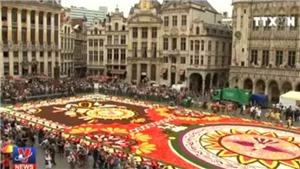 Rực rỡ thảm hoa khổng lồ tại Brussels