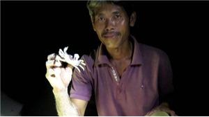 Trải nghiệm săn cua, còng đêm tại đảo Bé, Lý Sơn