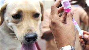 Bạn có đồng ý bỏ thói quen ăn thịt chó và cấm bán thịt chó?