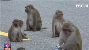 VIDEO: Du khách tự ý cho khỉ ăn trên Sơn Trà