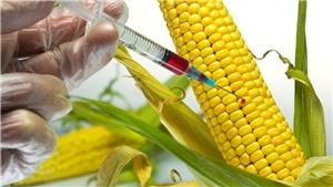Nhật Bản cho phép thực phẩm biến đổi gen bằng phương pháp tân tiến lưu thông trên thị trường