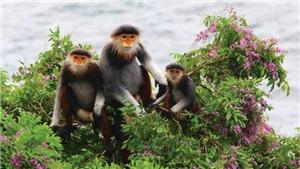 Săn bắt và buôn bán động vật hoang dã: Tác động xấu đến đa dạng sinh học