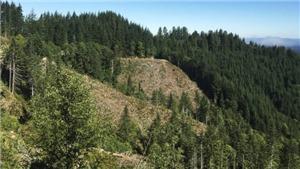 Mỹ mất gần 10 triệu hécta đất tự nhiên trong 16 năm qua