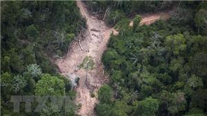 Báo động tốc độ chặt phá rừng Amazon