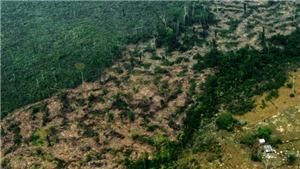 Greenpeace hối thúc bảo vệ 'lá phổi xanh thứ hai' của hành tinh sau Amazon