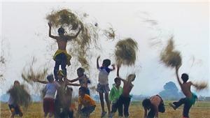 Sống chậm cuối tuần: Tháng Mười ra đồng gặt lúa