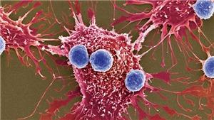 Mỹ tuyên bố thử nghiệm công nghệ chỉnh sửa gen trong điều trị ung thư