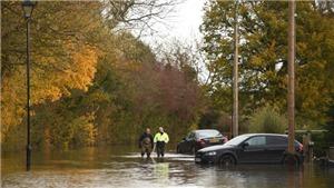 Vương quốc Anh lên kế hoạch dùng hải ly kiểm soát lũ lụt