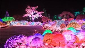 Rộn ràng Lễ hội mùa Đông ở Hàn Quốc
