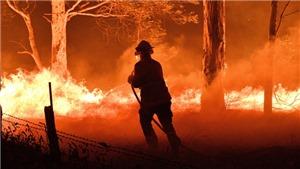 Cháy rừng tại Australia: Hơn 180 người bị bắt vi cố ý gây hỏa hoạn