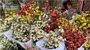 Những loại hoa Tết độc lạ đang được ưa chuộng Tết Canh Tý