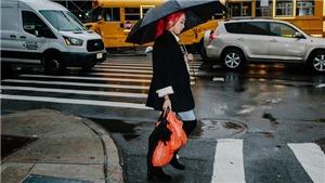 Thành phố New York Mỹ cấm sử dụng túi nilon