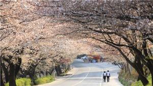 KTO tổ chức cuộc thi ảnh đẹp 'Relive Your Korea Trip'