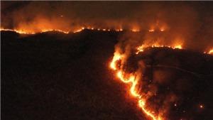 Diện tích rừng Amazon ở Brazil bị tàn phá tăng lên mức kỷ lục
