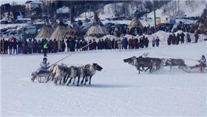 Đua hươu kéo xe trượt tuyết - môn thể thao độc đáo của nước Nga