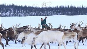 Cuộc sống du mục của trẻ em dân tộc Nenets vùng cực bắc Nga