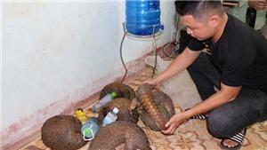Quảng Trị: Bắt giữ vụ vận chuyển động vật hoang dã quý hiếm