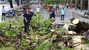 Cây phượng bật gốc sau cơn mưa, ba nữ sinh bị thương