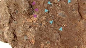 Hóa thạch trứng khủng long ở Nhật Bản được Guinness công nhận nhỏ nhất thế giới