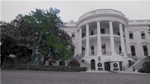 Lý do bà Melania Trump cho chặt cây mộc lan 200 tuổi trong Nhà Trắng