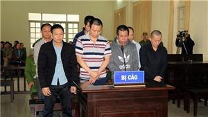 Xét xử sơ thẩm 7 đối tượng trong vụ hạ độc hàng ngàn cây thông ở Lâm Đồng