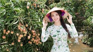 Á hậu Thụy Vân trở thành đại sứ thương hiệu vải Thanh Hà - Hải Dương