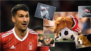 Được vợ tặng chó, 'hung thần' của Arsenal đặt luôn tên là... Pháo thủ
