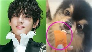 ARMY nổi đóa vì chú cún Yeontan của V BTS bị 'lợi dụng'