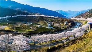 Những cung đường hoa xuân rực rỡ không thể bỏ qua tại Hàn Quốc