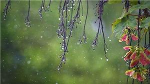 Cuối tuần, Bắc Bộ và Bắc Trung Bộ mưa dông