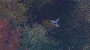 Phi công Nguyễn Thành Trung gặp nạn, hy sinh khi tham gia huấn luyện bay tại Vương quốc Anh
