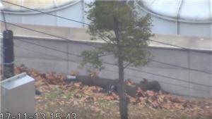 Công bố video vụ đào tẩu bất thành của binh sĩ Triều Tiên bị nã 40 phát đạn mà không chết