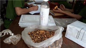 Ba người chết tại Nghệ An là do uống nhầm rượu ngâm có lá ngón