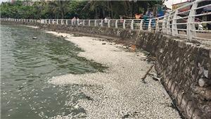 Dấu hiệu phá hoại hay đầu độc cá Hồ Tây chết trắng đang được xem xét loại trừ