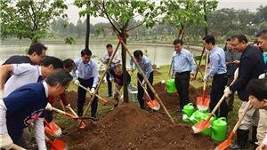 Trồng thêm 1.000 cây hoa anh đào tại Công viên Hòa Bình, Hà Nội