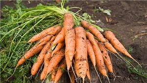 Tịch thu hơn 4 tấn cà rốt và tỏi Trung Quốc trên đường đi 'gắn mác' Đà Lạt