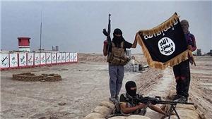 Ai Cập: Nhóm phiến quân Sinai Province thề trung thành với thủ lĩnh mới của IS